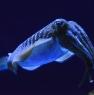 cuttlefish-web